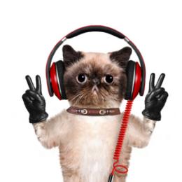 kočky v reklamě